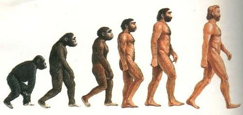 l'evoluzione secondo Google