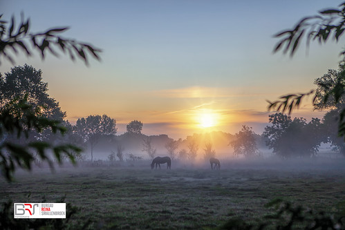 horses paarden sunrise zonsopkomst lettelbert groningen gemeentewesterkwartier westerkwartier mist fog