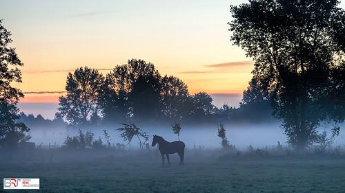 horse paard sietske lettelbert groningen westerkwartier gemeentewesterkwartier fog mist sunrise zonsopkomst