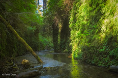 Jurassic Fern Canyon