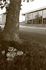Urban street with mushrooms