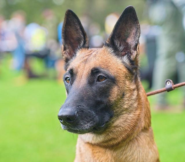organizacja społeczna ochrony praw zwierząt status strony