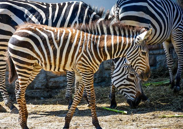 Hungary, Budapest - Budapest Zoo and Botanical Garden