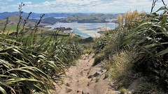 Otago Peninsula - Sandymount Path View to Hoopers Inlet & Otago Harbour