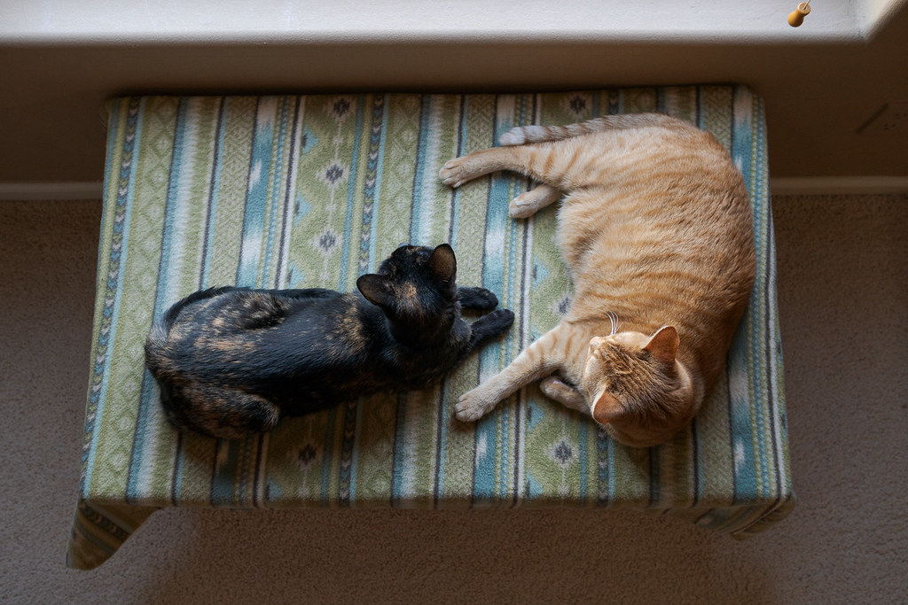 Our cats Trixie and Sam rest on a blanket on a chest beside a backyard window of our house in September 2019