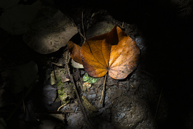 Shadow and Leaf