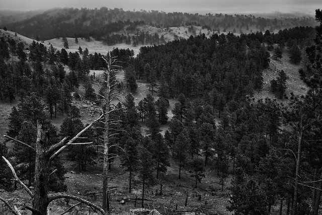 Rankin Ridge with Overcast Skies One May Afternoon (Black & White, Wind Cave National Park)