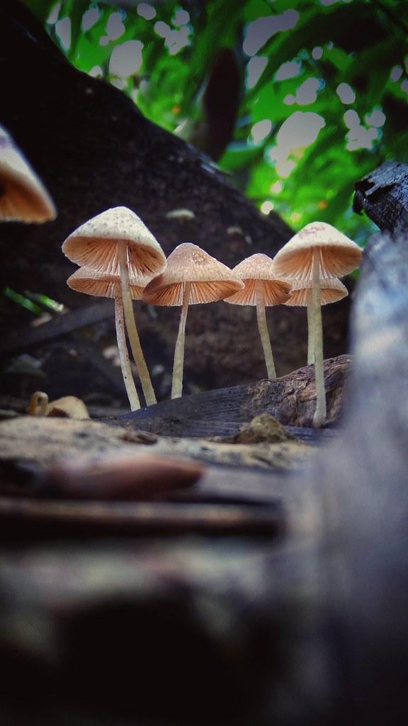 Mushrooms ?