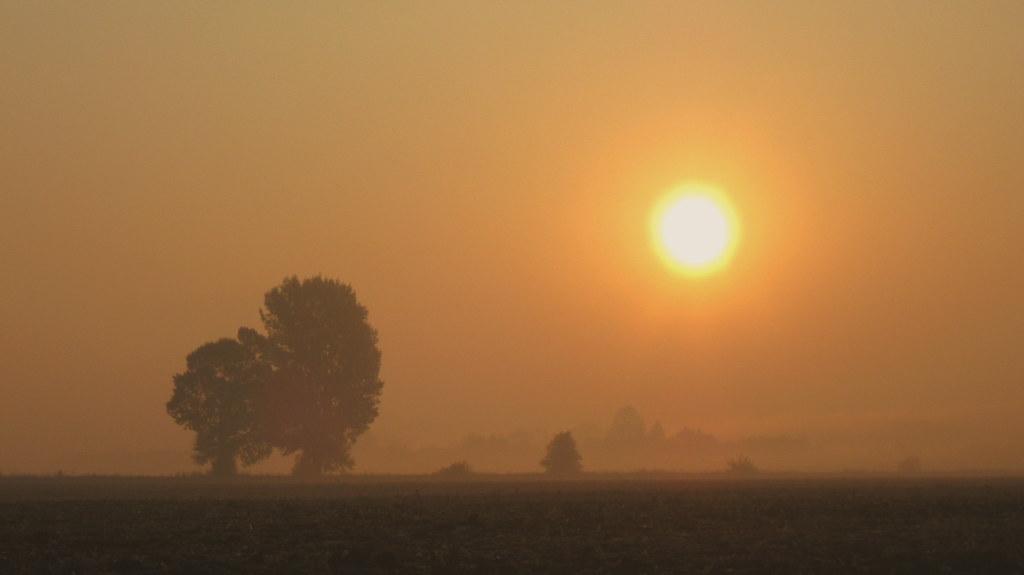 Autumn foggy morning.