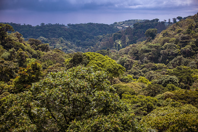 Jungle Vista - Monteverde Cloud Forest, Costa Rica