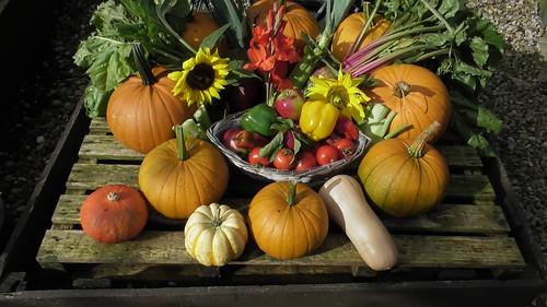 Whinnies harvest festival Sept 19 (1)