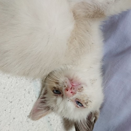 Rescueed kittein