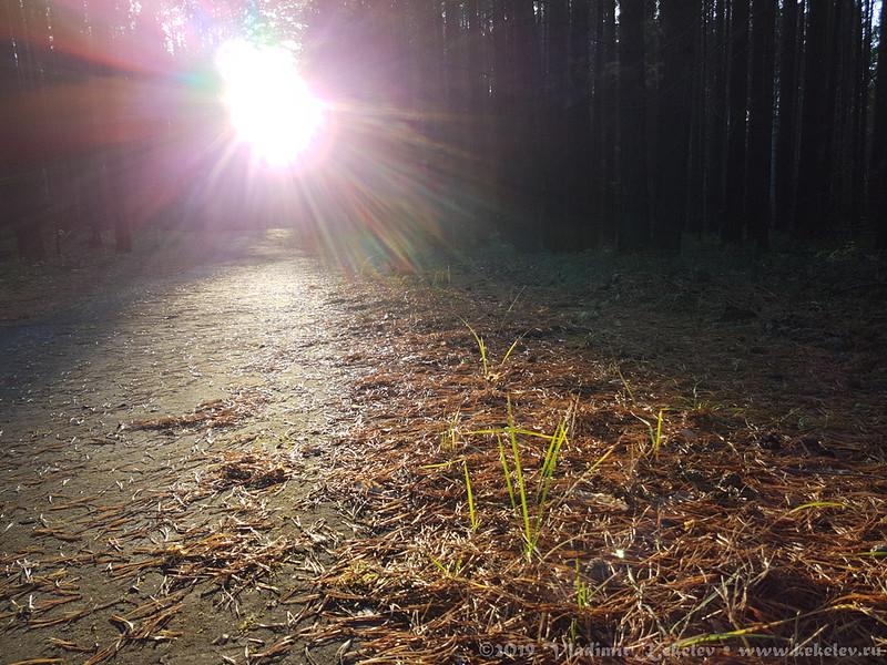 Беговая дорожка,  солнце, осень