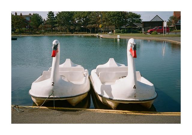 FILM - Swans