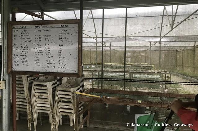 sanctuario-nature-farms-organic-farm-near-manila.jpg