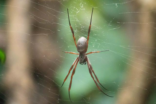 spider 25-09-19