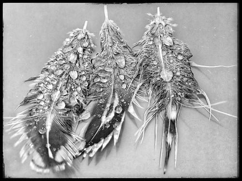 rainy day feathers
