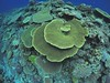 Coral reef - Gushiken Island by Okinawa Nature Photography