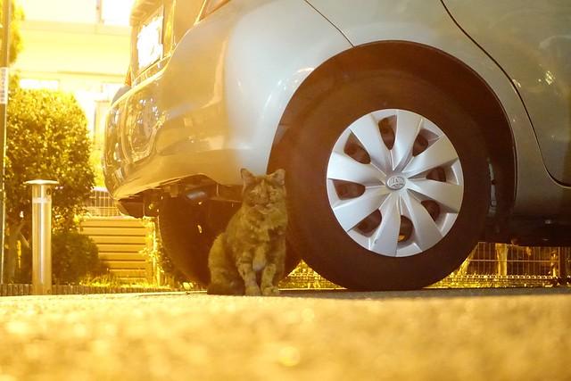 Today's Cat@2019-09-29