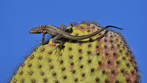 Spiny Lookout