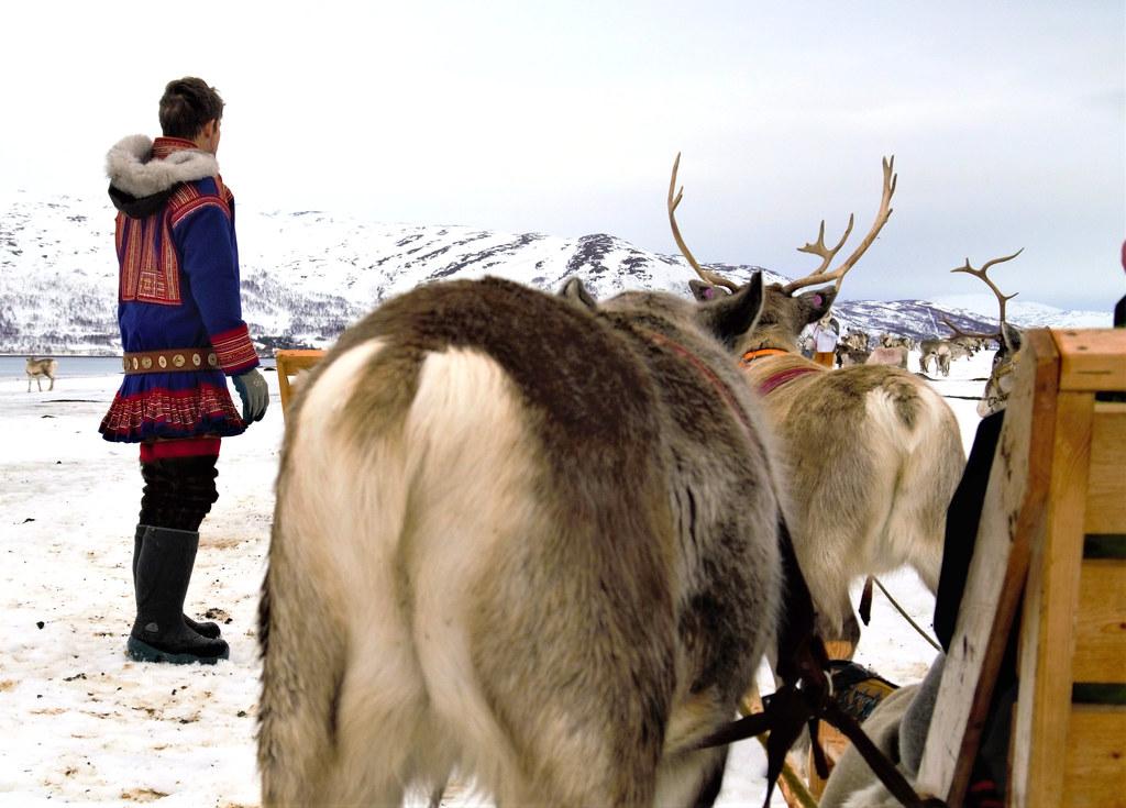 Tromsø Arctic Reindeer Experience