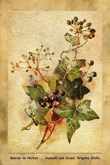 Beeren im Herbst ... Auswahl und Scans: Brigitte Stolle 2019
