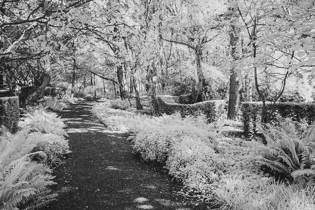 Shaded Walk