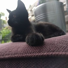 Hello Joey #cats #CatsOfInstagram #kitten #paws