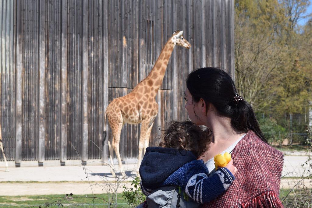 Aunque las jirafas fueron nuestras preferidas