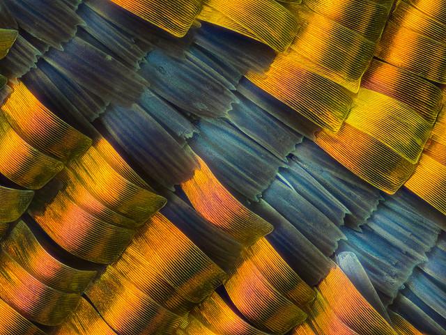 02_urania_167B__mplan20_0.86mm_1-8sec_2led+reflector