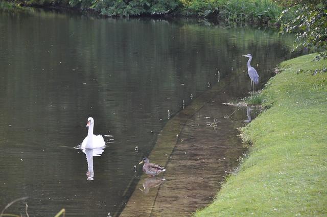 Swan, Duck, Heron