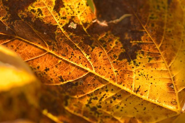 Quiero un otoño rojo como el amor, amarillo como el sol aún caliente en el cielo, naranja como los atardeceres encendidos al final del día, púrpura como los granos de uva para picotear. Quiero un otoño para descubrir, vivir, probar.