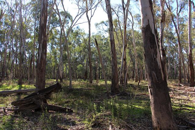 Murrumbidgee Valley Nature Reserve