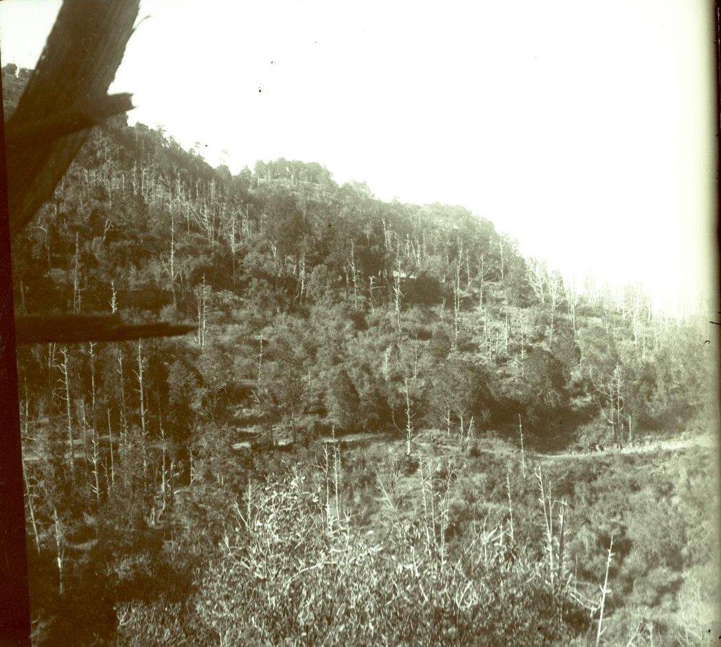 291. Абиссиния. Черчер. Лес близ Колюби