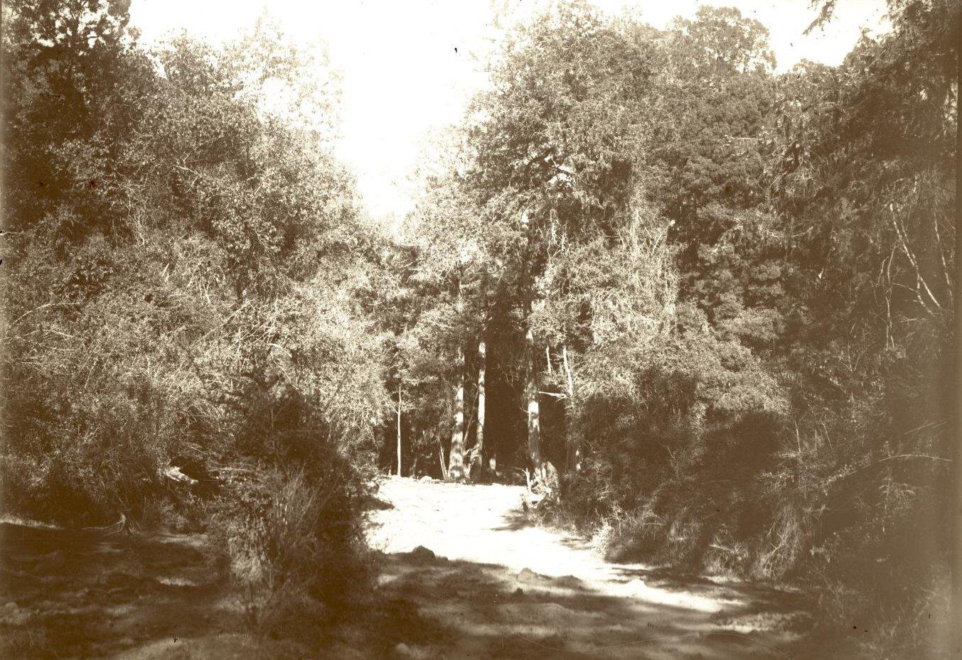 294. Абиссиния. Черчер. Лес близ Бурка