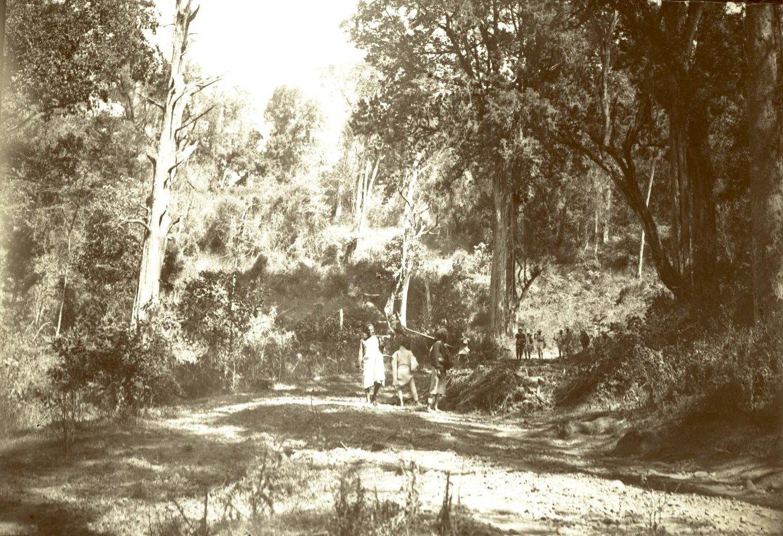 293. Абиссиния. Черчер. Лес близ Куки