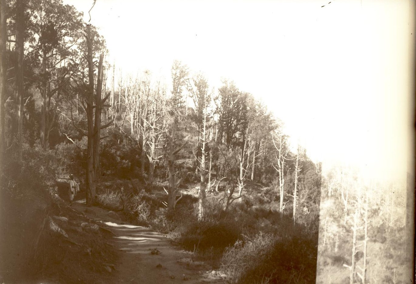 292. Абиссиния. Черчер. Лес близ Колюби