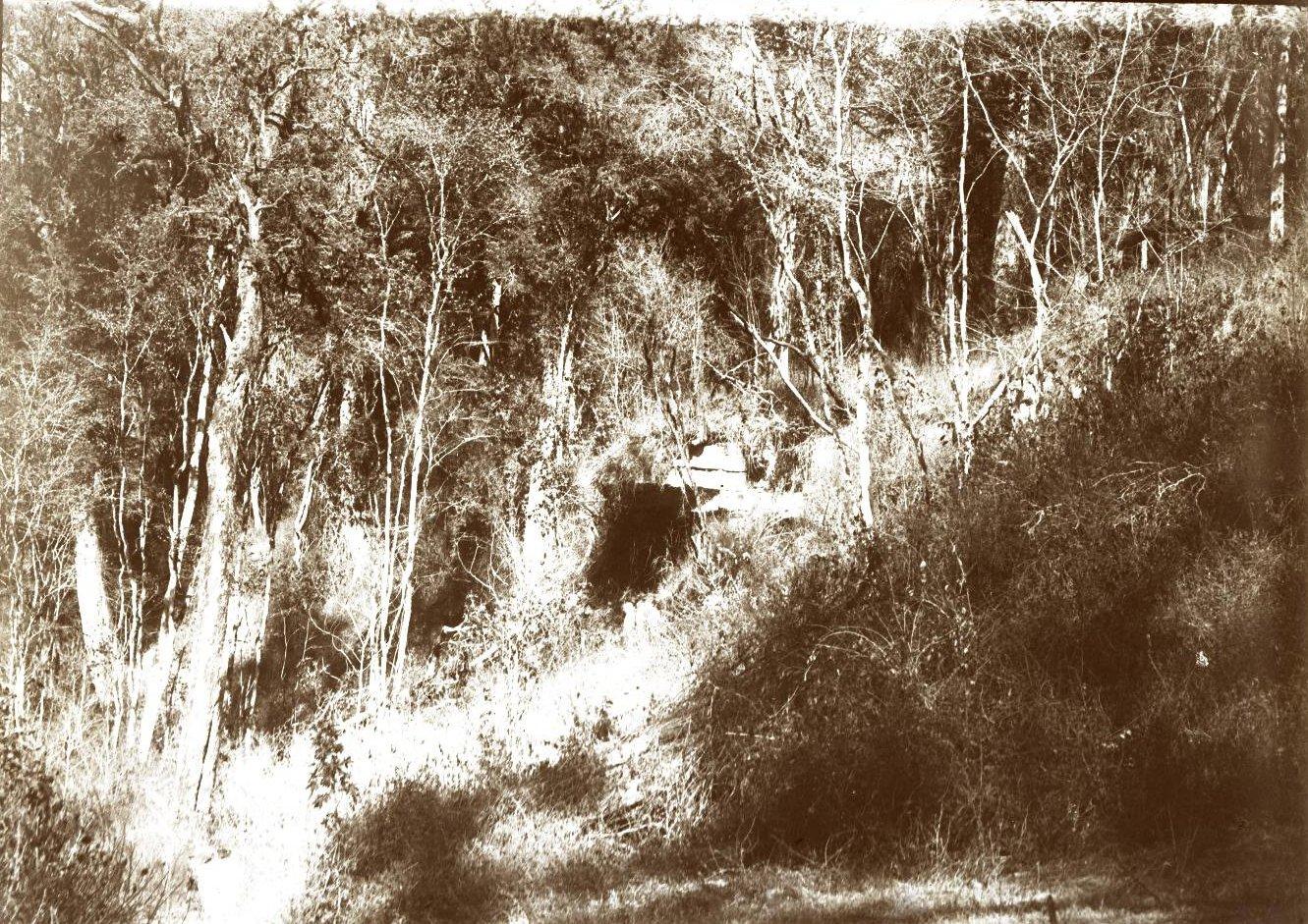 290. Абиссиния. Черчер. Лесной пейзаж вблизи села Челенко