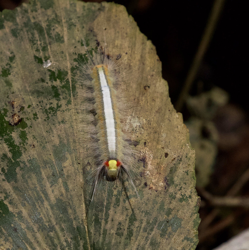 Caterpillar_Manu_Ascanio_199A3008