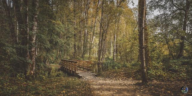 Bridge and Trail Nostalgic 2019
