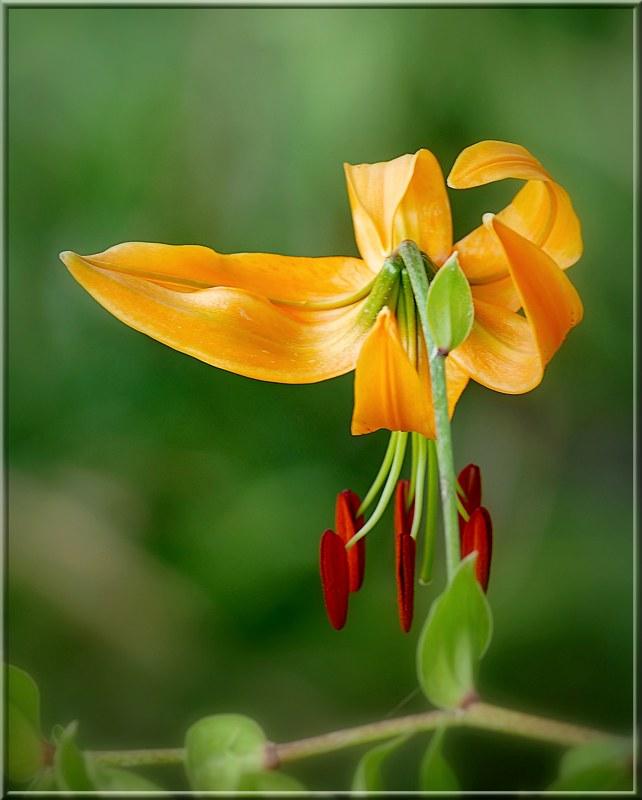 Au jardin des plantes. - Page 6 48817260101_ba6711b1b6_c