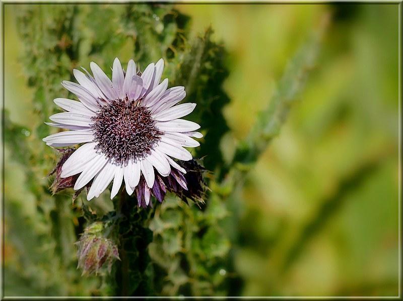 Au jardin des plantes. - Page 5 48817413752_5ca24770e7_c