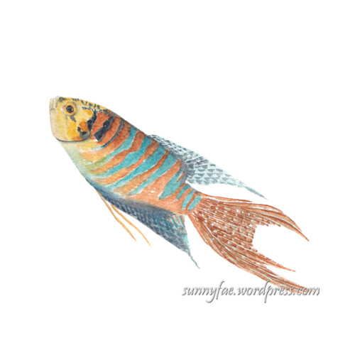 paradise fish watercolour painting