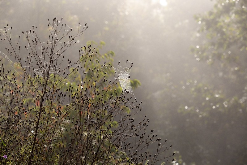 Sonne auf Spinnennetz.