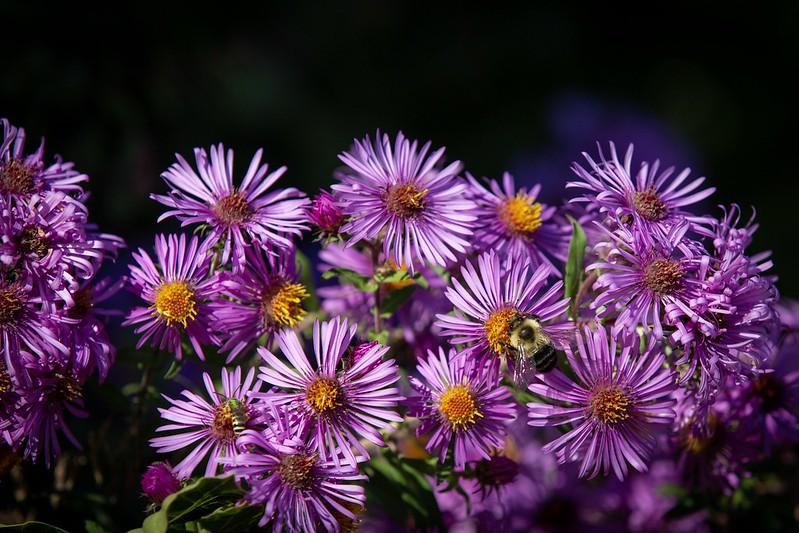 Blumen und Bienen.