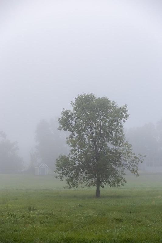 Ein mystischer Morgen.