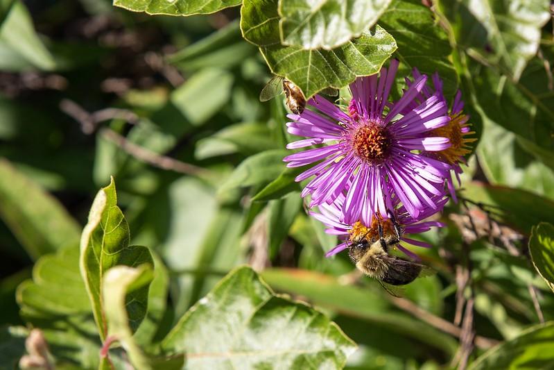 Fleissige Bienen.