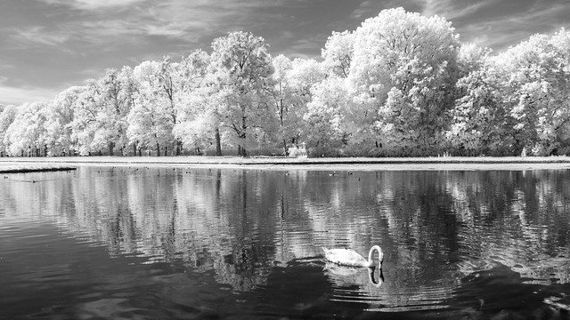 King of the Canal (Adventures in Infrared)