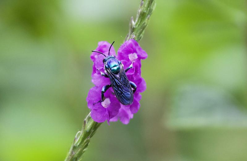 Insect_Ascanio_MAnu_199A9911