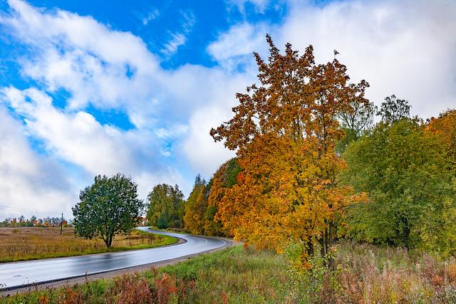 Colorful autumn / красочная осень